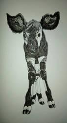Okapi calf by RocaTeithmore