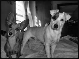 Cute Lil Doggies by alli-rae