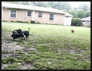 Doxies At Play by alli-rae