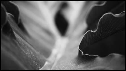 Leaf by TimewiseStudios