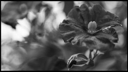 Flower by TimewiseStudios