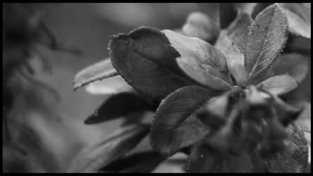 Flower 2 by TimewiseStudios