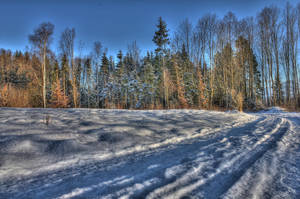 Snowy Forest HDR by IcyDani
