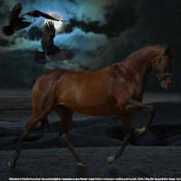 Raven by WildDogArt