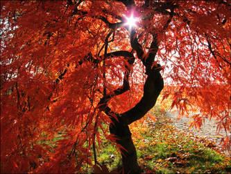 autumn III by Schleifchen