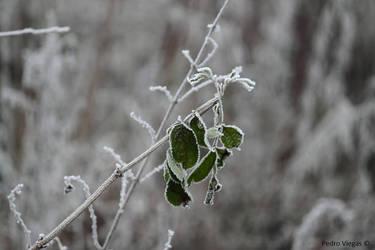 Frozen by PedroViegas