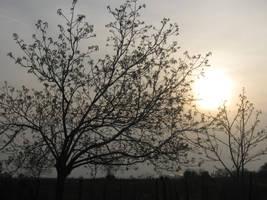 Spring sun by black0moon