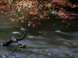 oregon creek 3 by Alegion-stock