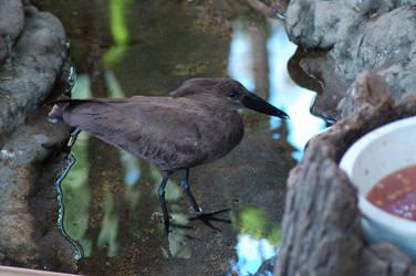 Bird 1 by Alegion-stock