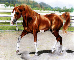 Arabian stallion finished by ManiaAdun