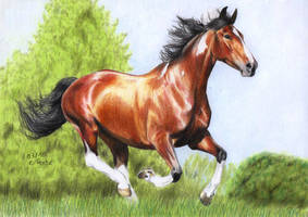 Pinto Horse by ManiaAdun