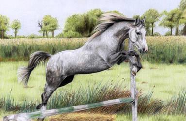 Grey Horse by ManiaAdun