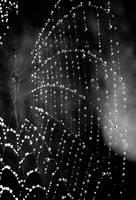 Into the Web by Jolidiamond