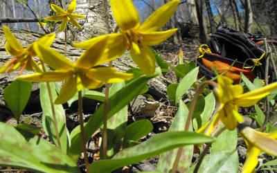 Yellow flowers by Gwifitz