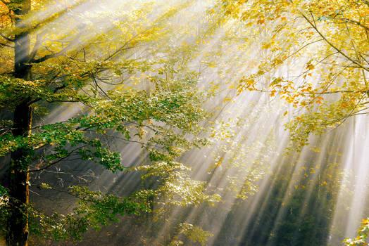 Herbstlicht by CaveCanem42