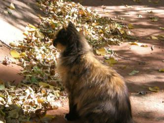 Autumn Feline by grapeshotmemory