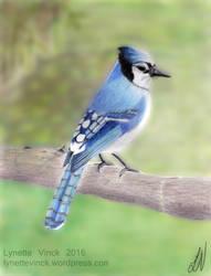 Blue Jay by whiterayven