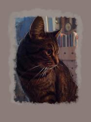 Lucy Cat  by billiambabble
