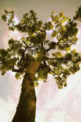 Tree by merazz