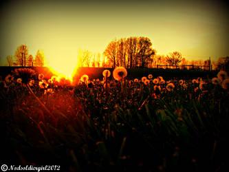 Dandelion Sunset by NODSOLDIERGIRL