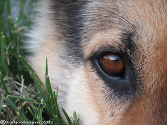 Just A GSD by NODSOLDIERGIRL