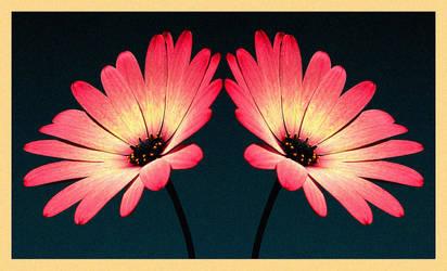 Flowers by tas-poetry