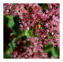 Milkweed Bug by Ragnar949