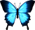 blue butterfly [F2U] by RandomPixelAccount