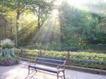 Sunlight Beams by Bonnzai