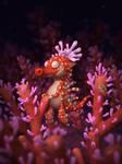Little Sea Dragon by carlsonwkk