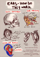 Ears: How do they work by RuxandraLache
