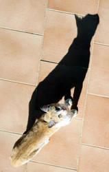 Gato by antimonita