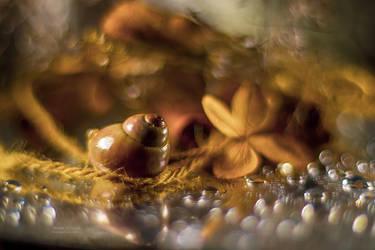 seashell... by mirandaarts