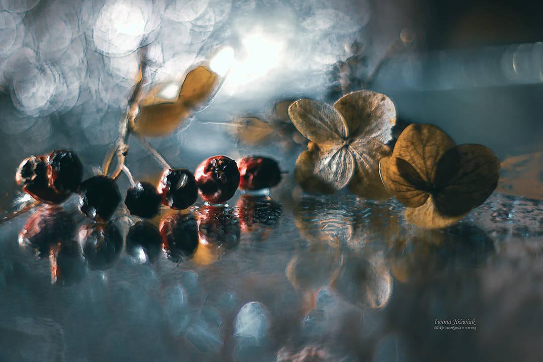 autumn treasures ... by mirandaarts