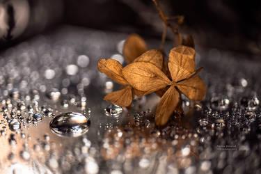drops... by mirandaarts