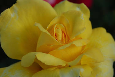 Yellow Flower by w-o-l-d-o