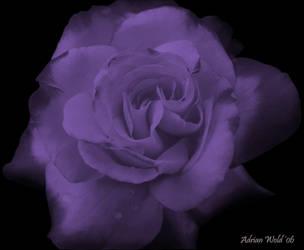 Deep Purple by w-o-l-d-o
