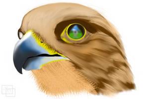 Falcon by Bonezkd