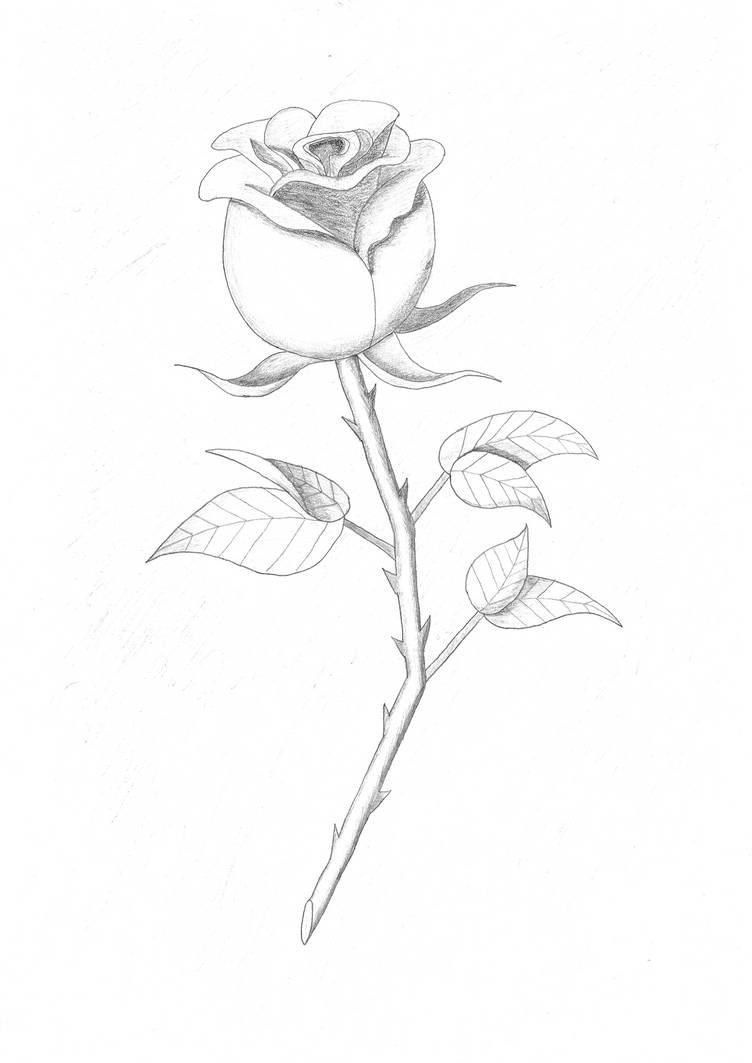 Rose by RinsakuBlade