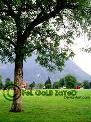 Green-LanD by FeL-GaLB-ZaYeD
