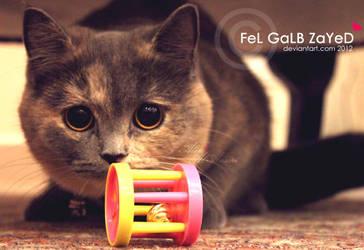 Ready to Play? by FeL-GaLB-ZaYeD