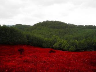 BULGARIA by j0rdancho