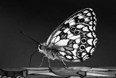 Butterfly by 2DoMeN2