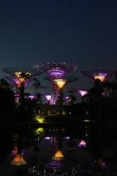 Night Garden by The Bay by chocopple