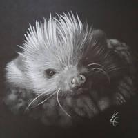 Fluff the hedgehog by MissKuney