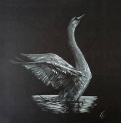 Swan Takeoff by MissKuney