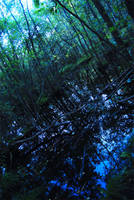 Swampish by tantrut