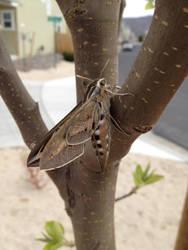 Moth by Necroserpent