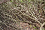 Branches by yereverluvinuncleber
