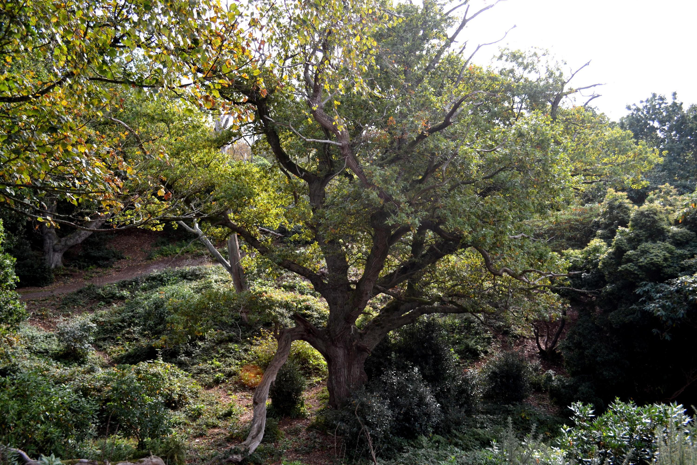 Lovely old Tree... by yereverluvinuncleber